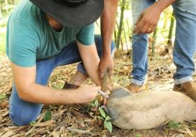 Estudantes de Agroecologia do IFG participam de vivência na roça da Vila Esperança