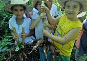 Escola na Roça cultivando a Mandioca